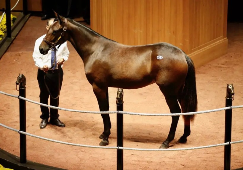 Dave Landry   Hip 432, the Kadabra filly out of Glide By that sold for $300,000.