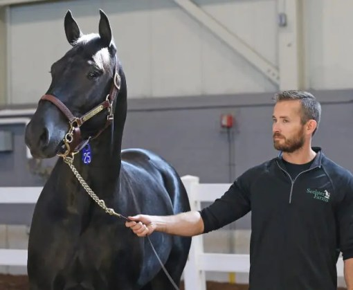 Claus Andersen | Marlboro Seelster, the richest standardbred ever sold at auction, with Walter Parkinson of Seelster Farms.
