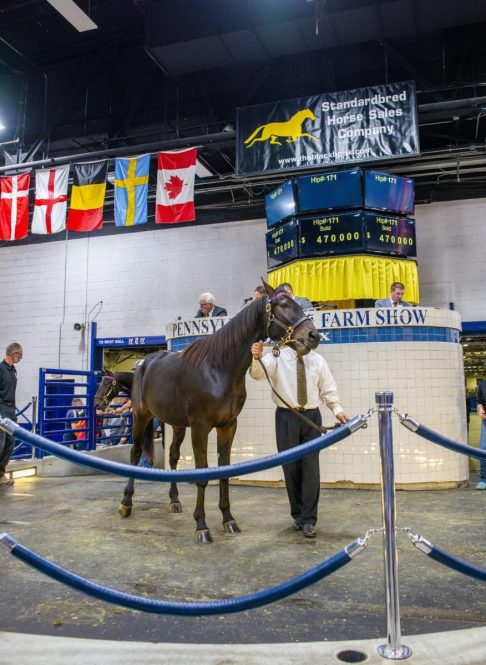Triscari Video Web and Marketing | Hip 171 Glacier Hanover (c, Father Patrick—Global Desire) sold for $470,000 to Jeffrey Snyder of New York.