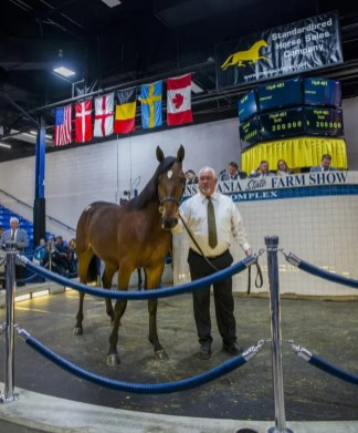 Triscari Video Web and Marketing | The third-highest priced yearling sold was Hip 481 Ghetto Boy, a Cantab Hall colt out of Galloway that sold for $200,000 to Swedish agent Robert Lindstrom out of the Concord Stud consignment. Ghetto Boy was bred by Stefan Balazsi's Order By Stable of Sweden.