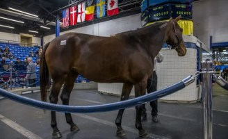 Triscari Video Web and Marketing | Hip 1053 broodmare Darlinonthebeach topped the first day of the mixed sale - and the White Birch Farms dispersal - when she sold for $450,000 to Diamond Creek Farm out of the Preferred Equine consignment.