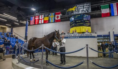 Triscari Video Web and Marketing | Hip 1181 broodmare Secret Passion was the second highest mare sold on opening day of the mixed sale. She fetched $425,000 from Hanover Shoe Farms and was sold by Walnridge Farm Inc., agent.