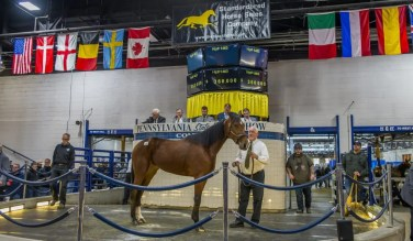 Triscari Video Web and Marketing | The second highest-priced horse sold Friday was hip 1463 Starita, a Trixton filly out of Morningstar purchased by Hanover Shoe Farms for $360,000 out of the Preferred Equine consignment.