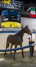 Triscari Video Web and Marketing | The fourth-highest priced yearling sold was Hip 372 Donna Soprano, a Donato Hanover colt out of Windsong Soprano that sold for $190,000 to Sere Godin's Determination Stable out of the Preferred Equine consignment.