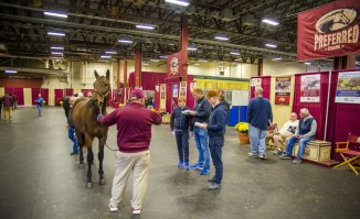 Triscari Video Web and Marketing   Preferred handled the White Birch Farms dispersal which grossed $3,513,000 for 30 broodmares and just over $1 million, total, for its 17 stallion shares. The complete dispersal grossed $4,557,000.