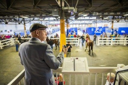 Triscari Video Web and Marketing | The view from the back ring auction stand.