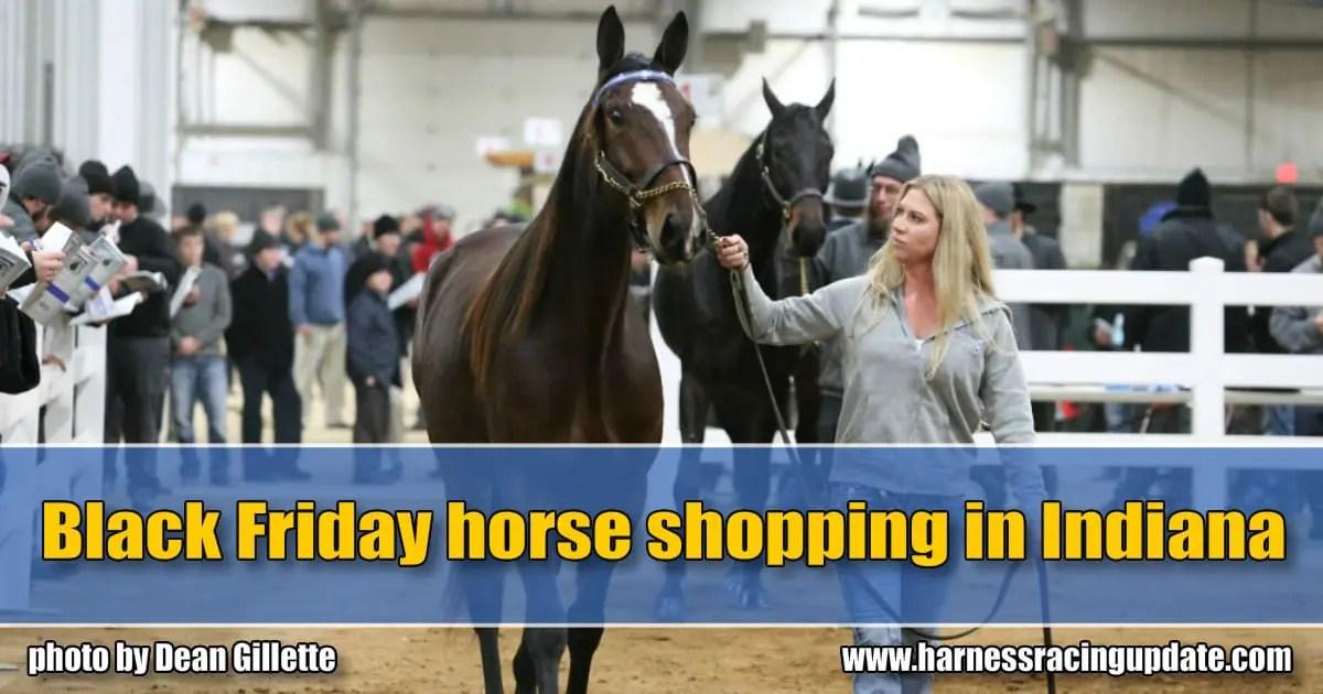 Black Friday horse shopping in Indiana