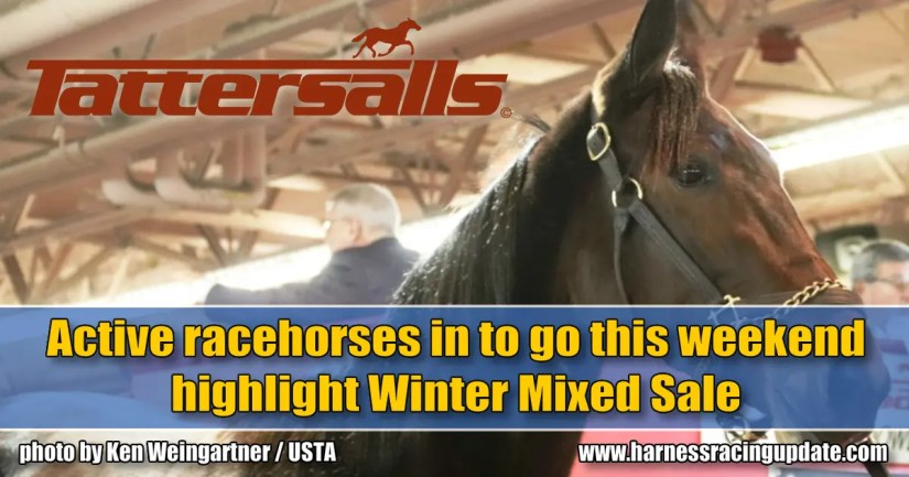 Active racehorses in to go this weekend highlight Winter Mixed Sale
