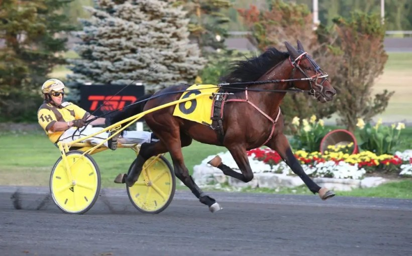 New Image Media | Dr. David Grant's Horse Trader winning a leg of the Define The World at Woodbine Mohawk Park on Aug.