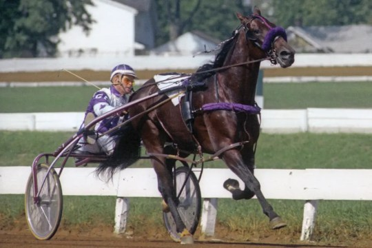 USTA   It is almost 40 years to the day after Niatross (shown racing at Lexington) fell over the hubrail at Saratoga.