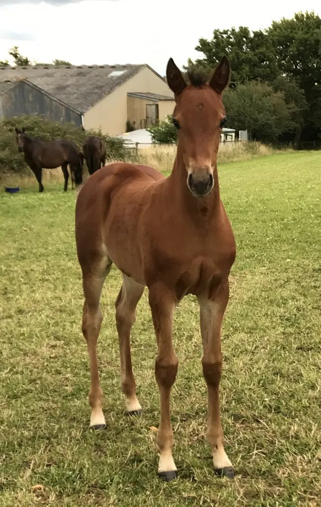 Tom Hill filly out of No Messin foaled in the UK