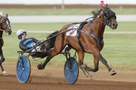 Dave Landry | The first successful example of combining French and American blood was International Moni (shown winning a Bluegrass at Lexington in 2017 with driver Scott Zeron wearing Lindy Farms colors). International Moni is a son of French stallion Love You out of Moni Maker.