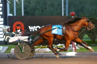 New Image Media | Trainer Pam Forgie's Lifelong Wish (Mike Saftic) winning an Ontario Sires Stakes Grassroots division for freshmen trotting colts on Aug. 25 at Woodbine Mohawk Park.
