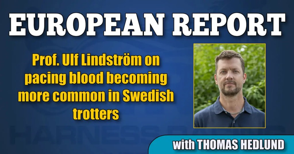 Prof. Ulf Lindström on pacing blood becoming more common in Swedish trotters