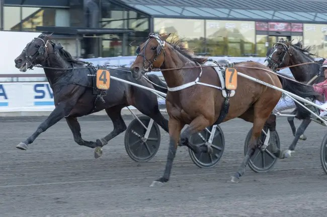 ALN | Five-year-old Muscle Hill son Missle Hill (4, Per Lennartsson) won Sunday's $165,000 STL Open final at Solvalla.