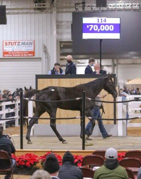 Dean Gillette | Joe Parisi was one of the more active bidders, using the Proxibid platform for his purchases. Parisi bought 6-year-old Always A Virgin mare Always Giggling, Hip 114, for $70,000.