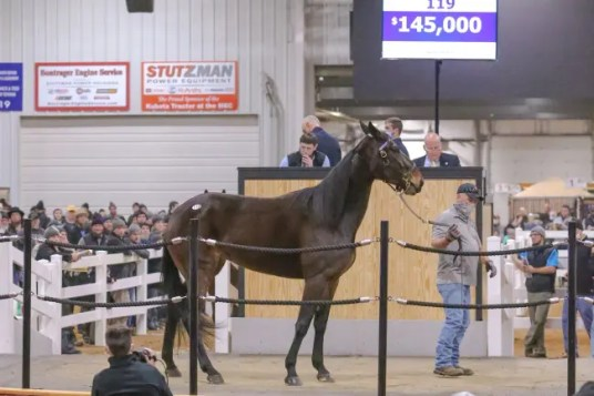 Dean Gillette | Indiana champion Rock Swan headlined the racehorse segment of Tuesday's Midwest Mixed Sale. The Swan For All—Jolly Jessica sophomore was a supplemental entry to the sale, the result of a dissolved partnership. Steve Cross signed the ticket for $145,000, acting as agent.