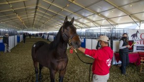 Triscari Video Web and Marketing | A number of large tents and portable stalls were used to accommodate all the yearlings.