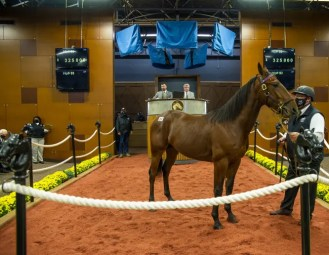 Triscari Video Web and Marketing | McDuffee also purchased Hip #93 Energetic Hanover, a Captaintreacherous colt out of Eloquent Grace for $325,000.