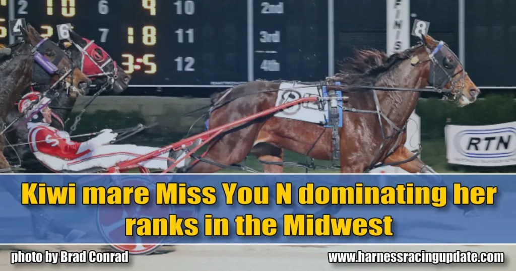 Kiwi mare Miss You N dominating her ranks in the Midwest