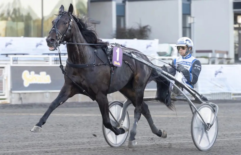 Tommy Andersson/ALN | Jerry Riordan's Aetos Kronos will race at Vincennes on Saturday afternoon.