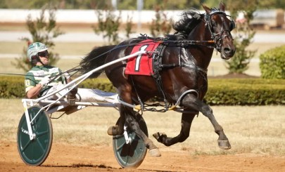 Dave Landry | Tall Dark Stranger (Yannick Gingras) was voted the Horse of the Year, Pacer of the Year and sophomore pacing colt of the year.