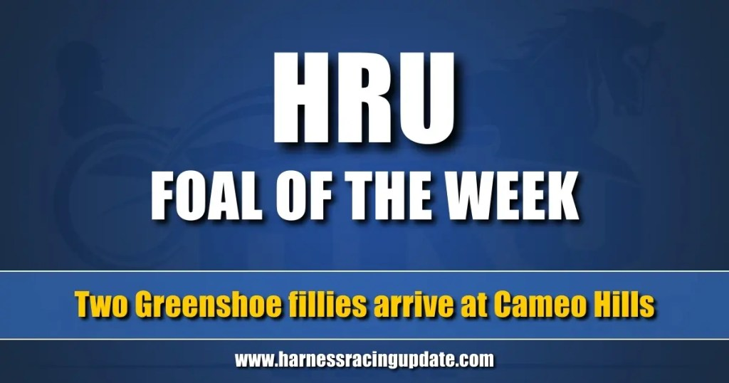 Two Greenshoe fillies arrive at Cameo Hills
