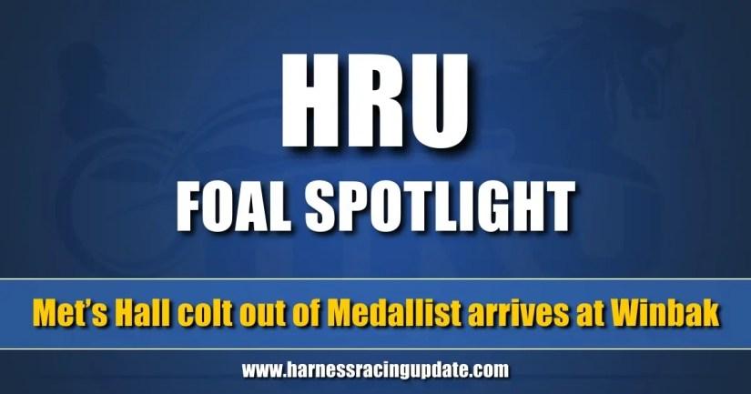 Met's Hall colt out of Medallist arrives at Winbak