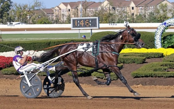 Mark Hall / USTA | Always B Miki (David Miller) is the first standardbred in history to record a 1:46 mile.