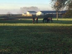 Courtesy Wilson family | Ashley and Dean Wilson's breeding farm in Kerwood, ON.