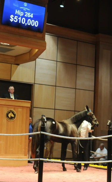 Adam Ström / stalltz Walner filly Singeth With Joy (hip 264) was the second highest priced yearling sold Wednesday. He was bought for $510,000 by Ken Jacobs from Hunterton.