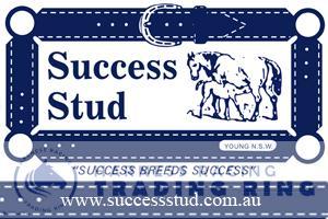 Success Stud Young NSW Australia