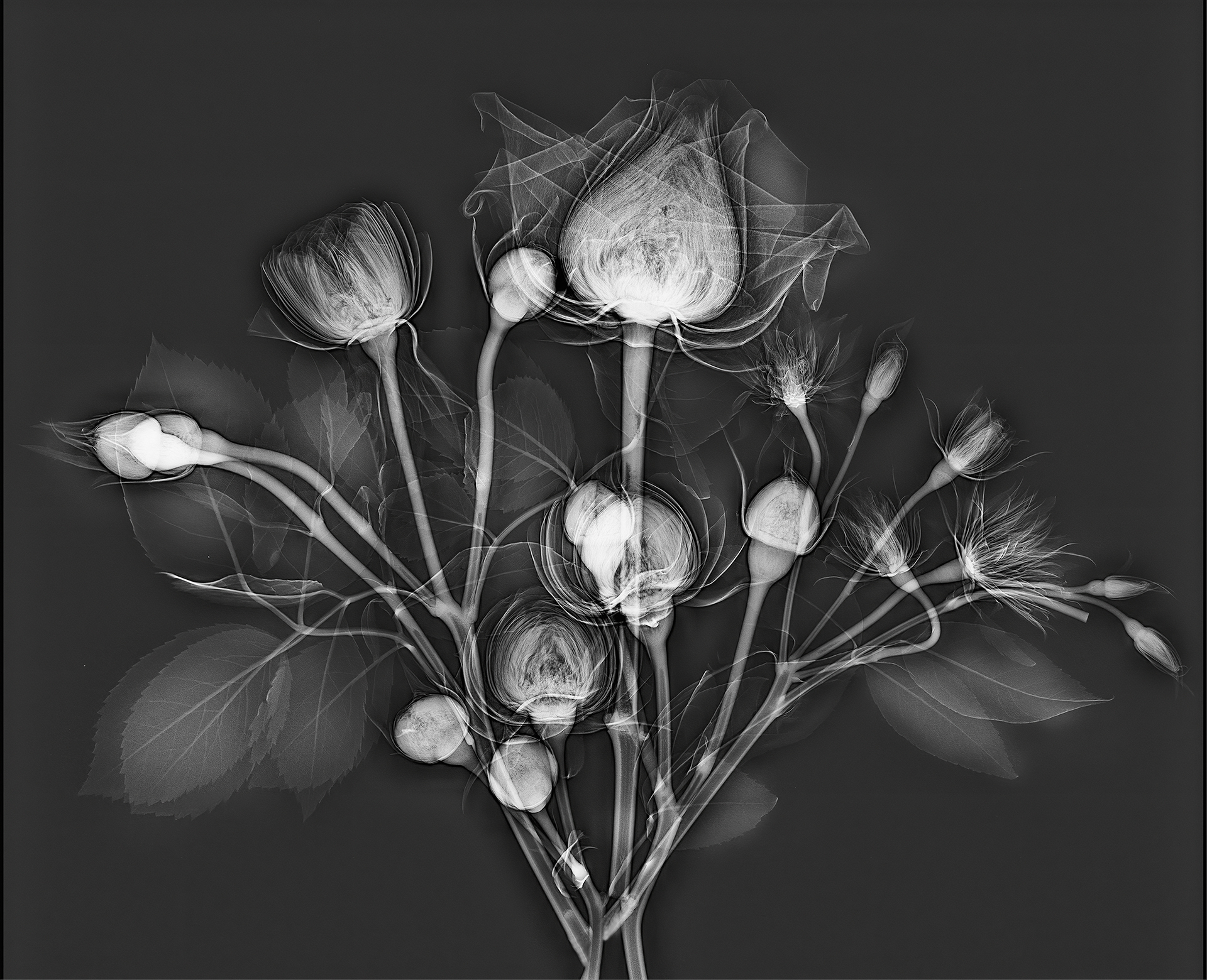 X Ray Photos Of Flowers