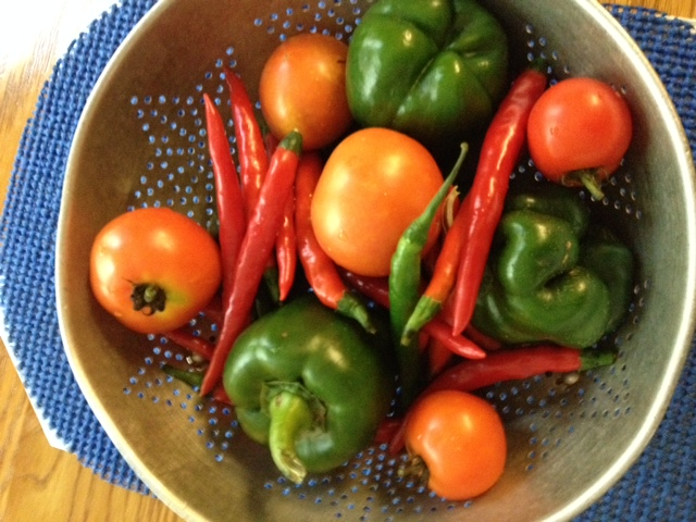 A good Paleo diet should start with fresh veggies. I grew these tomatoes, green bell peppers and cayenne peppers in the garden out back. They were harvested in time to begin eating the Paleo way.