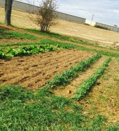 Tilling growing areas in preparation for rest