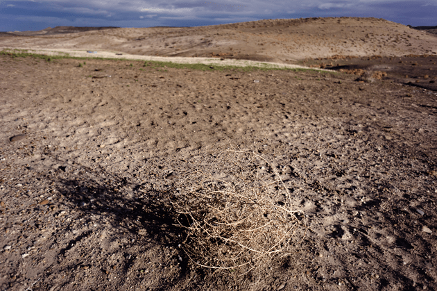 A tumbleweed near hoof marks on a grazed patch of Jarbidge BLM land in Idaho. Photograph by Tomas van Houtryve