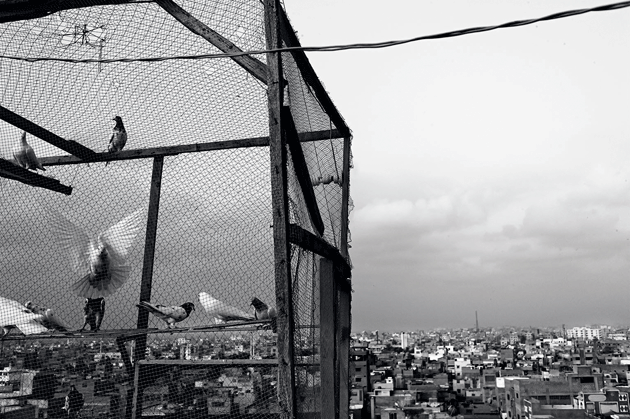 A pigeon coop on a rooftop in Lyari