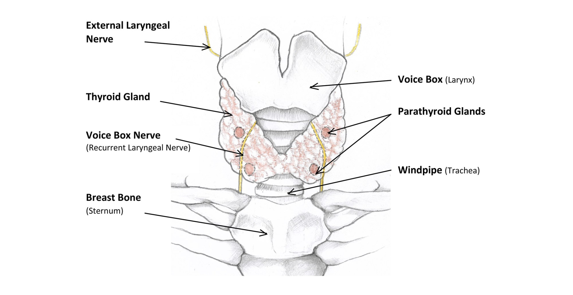 hight resolution of diagram of thyroid surgery just wiring diagram diagram of thyroid surgery