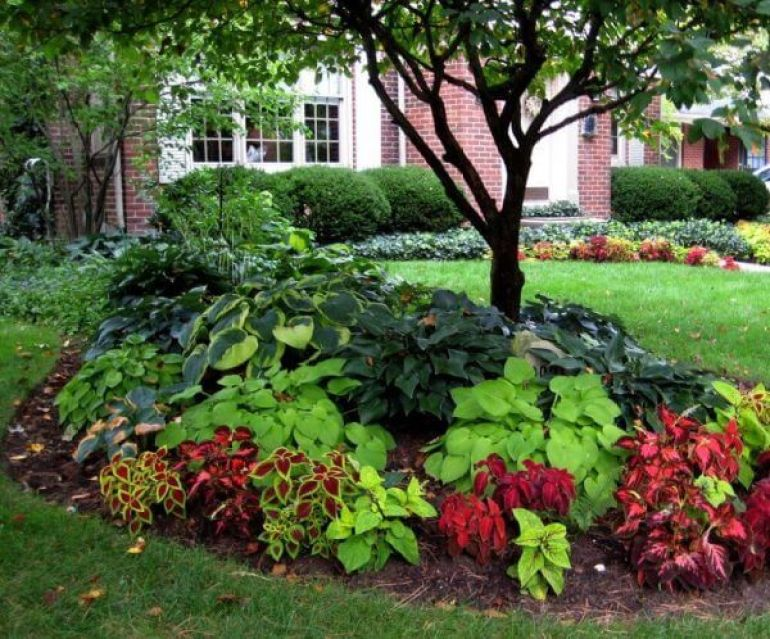 "Front Yard Landscaping Ideas - Coleus as well as Hosta ""Blossom"" Beds -harpmagazine-com"