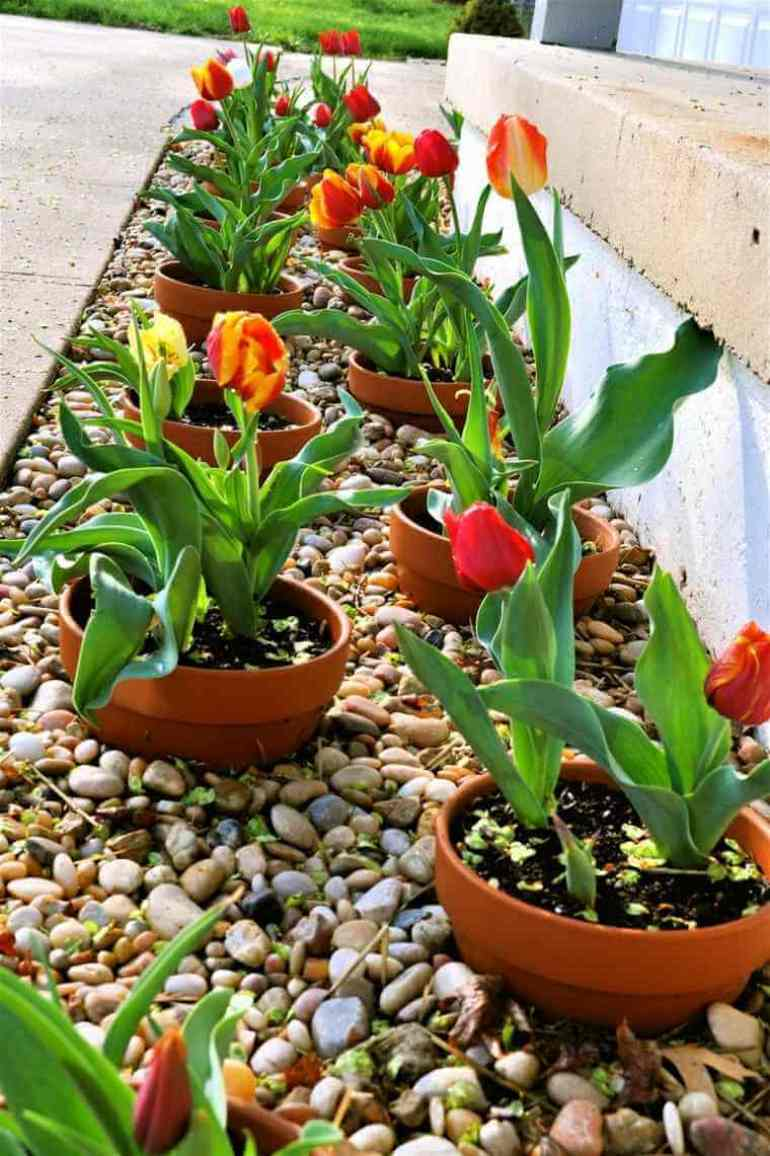 Front Yard Landscaping Ideas Easy-to-Update Potted Border - harpmagazine