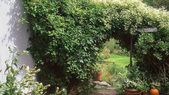 Backyard Landscaping Ideas - An Elegant Entrance - harpmagazine.com