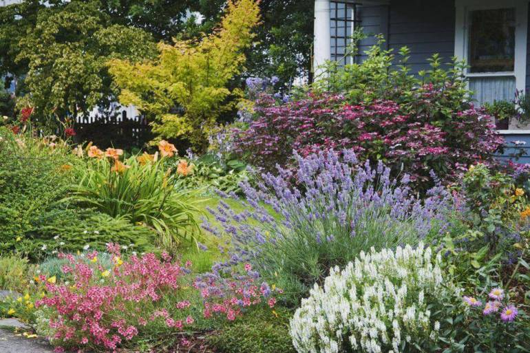Backyard Landscaping Ideas - Plant Lavender - harpmagazine.com