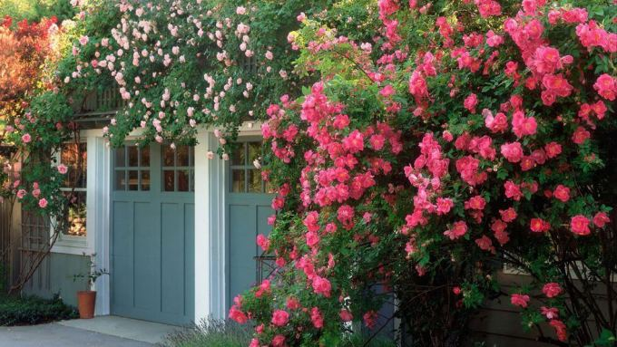 Backyard Landscaping Ideas - Rosy Outlook - harpmagazine.com