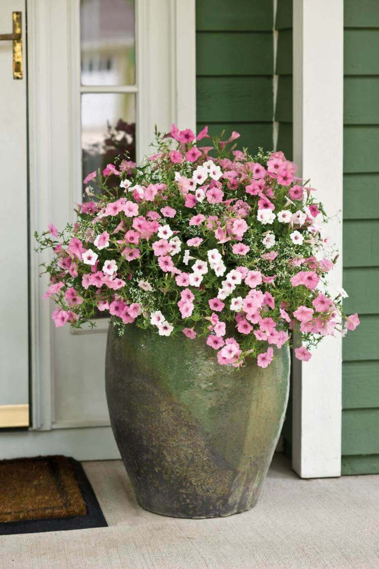 Front Door Flower Pots Ideas - Giant Clay Front Door Flower Pot Design - harpmagazine.com