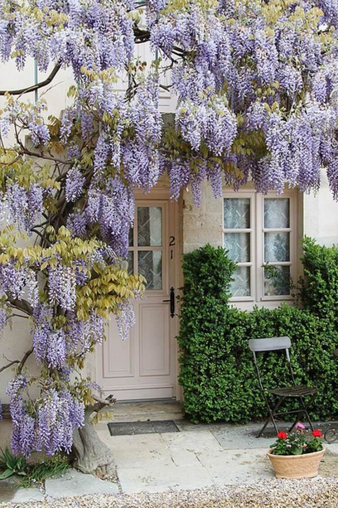 French Country Decor Frame Your Door with Wisteria Vines - Harppost.com