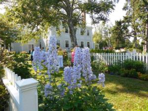 Lovely delphiniums at the Spite House gardens.