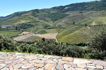 Castro vine terraces