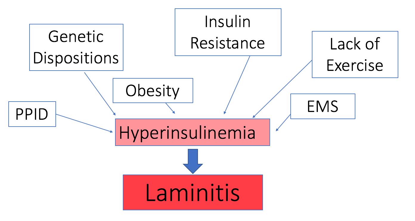Today's Laminitis