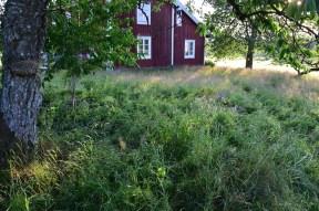 trampat gräs