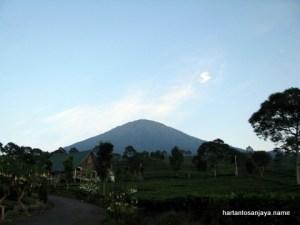 Penginapan di tengah hijaunya teh dan berlatar Gunung Dempo